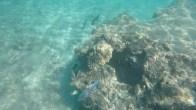 Snorkeling -1