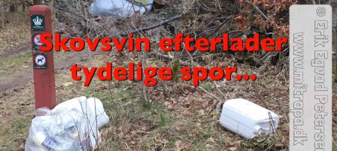 Skovsvin efterlader tydelige spor i Aabenraa Kommune…