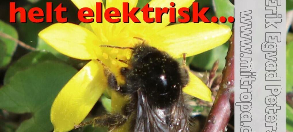 Humlebier og i det hele taget alle bier og hvepse er elektriske