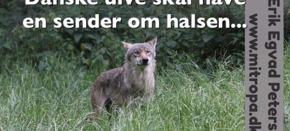 Danske ulve skal have halsbånd på