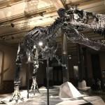 自由研究で小学生が恐竜を調べるときのテーマやまとめ方