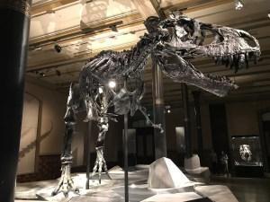 恐竜自由研究