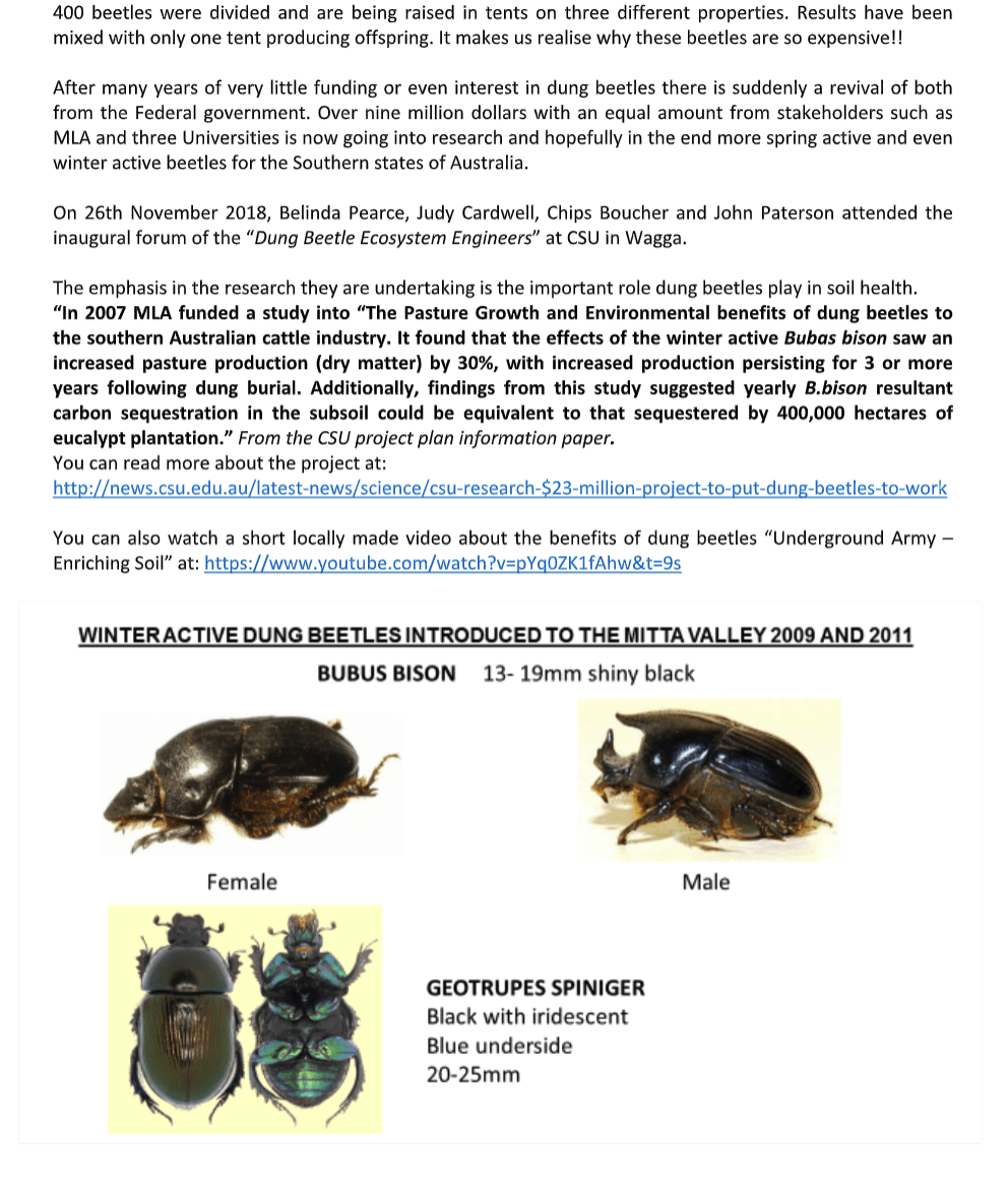 Dung Beetle in Mitta 3