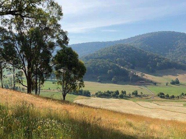 Mitta Valley Scenery