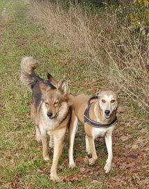 Mila & Izzi