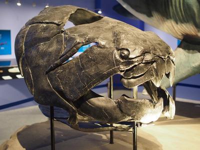 國立科學博物館「生命大躍進」(2): ヴンダーカンマーの輪舞曲(ロンド)