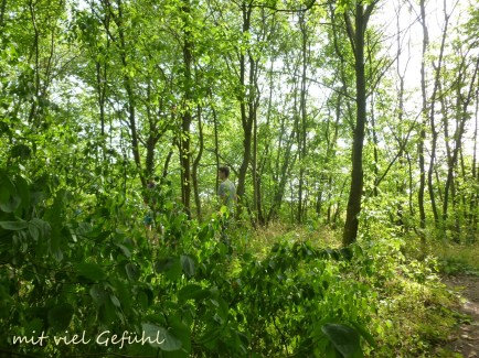 8. Wald