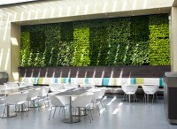 Living Green Wall in Patio Cafes_Phase 1 - Mitzi ...