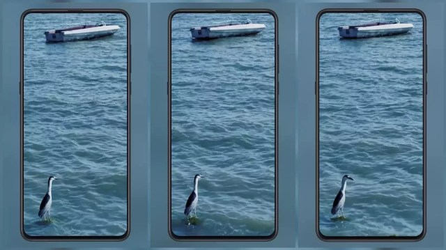 A bird standing in the sea MIUI Video Wallpaper