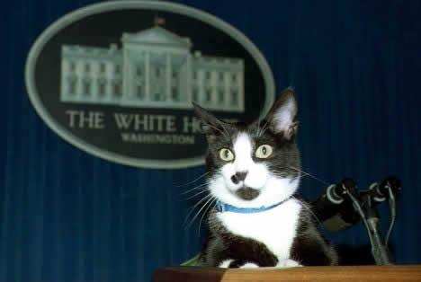 Gato presidencial