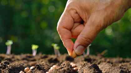 sembrar-semillas-en-jardin