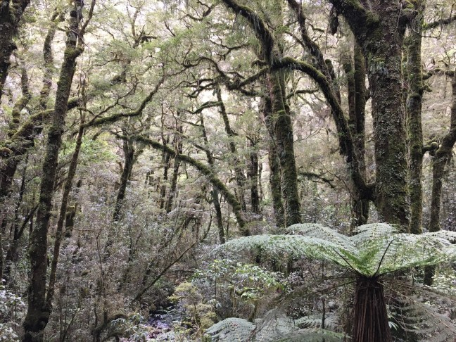 Lo que vas a escuchar a continuación, es una comunicación del bosque dada a nueve personas en un bosque próximo a Albalate, Guadalajara, España.