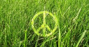 greenpeace-day