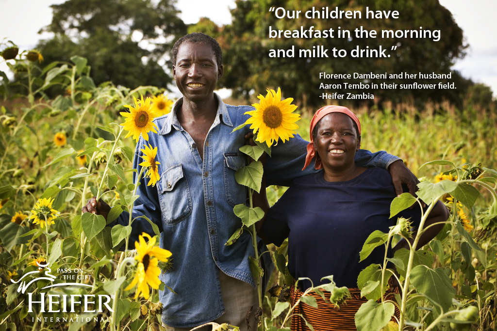 """Couple in field of sunflowers in Zambia - """"Our children have breakfast in the morning and milk to drink."""""""