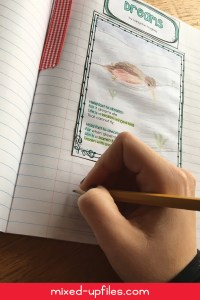 Langston Hughes Mother to Son interactive notebook lesson