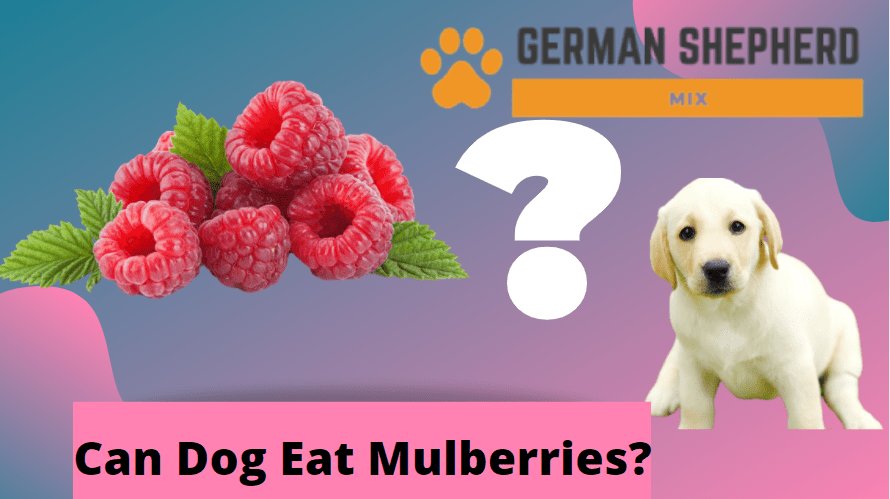 Can Dogs Eat Mulberries? Complete Overview ...