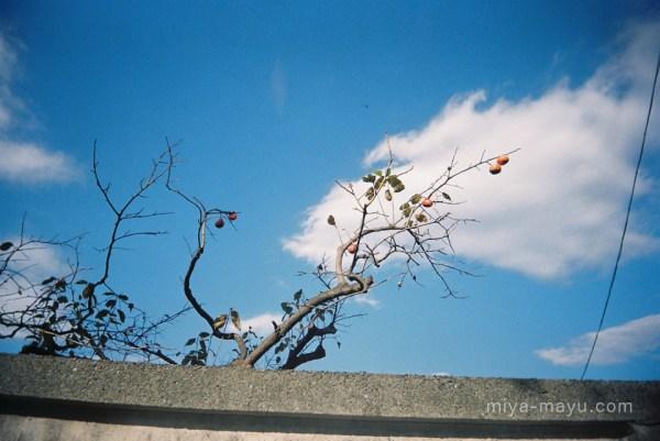 141115photowalk01
