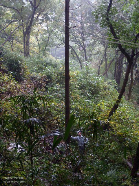保全活動実践の伐採作業 2015.11.8