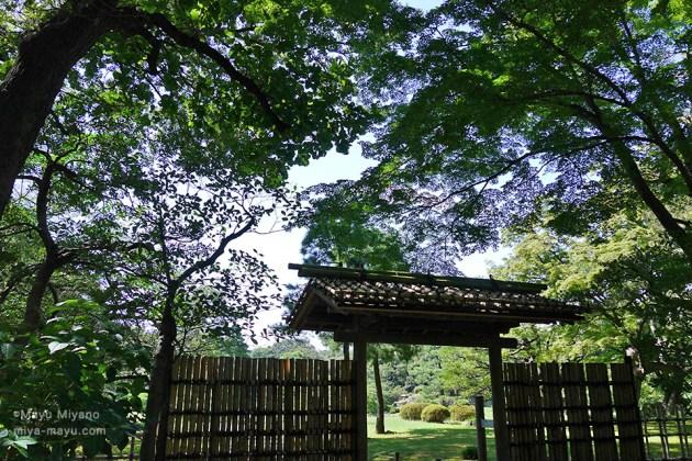 残暑の陽射し 2016.9.3 東京都文京区・六義園