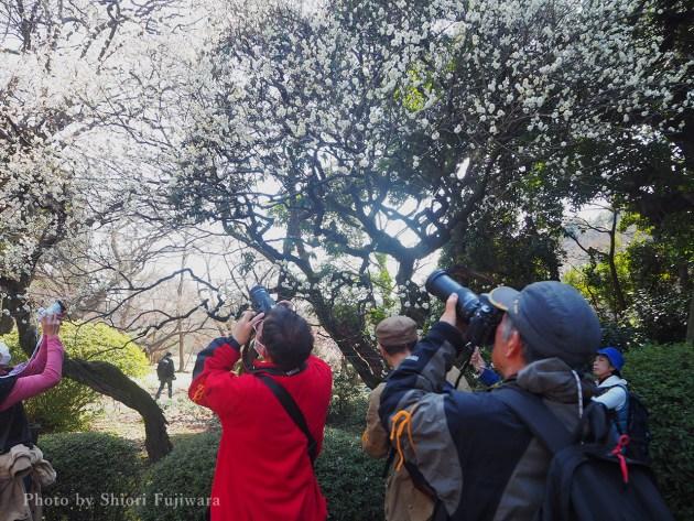 3月4日(日)「カメラで楽しむ公園散歩」無事終了しました。新宿御苑(東京都新宿区)