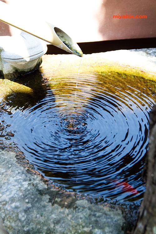 水琴窟,金魚