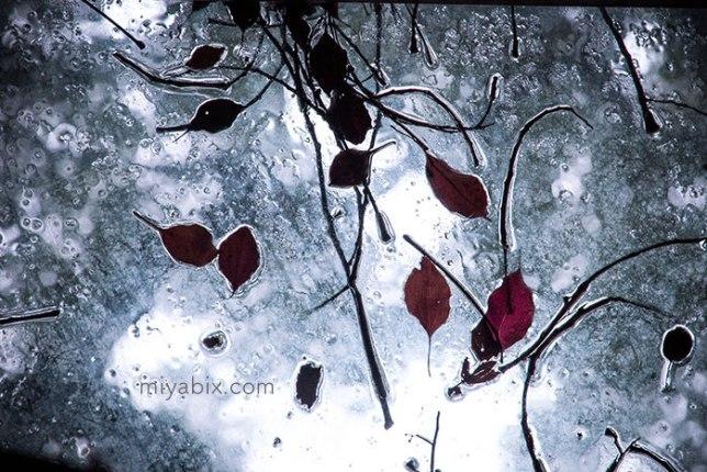 ガラスの葉っぱ