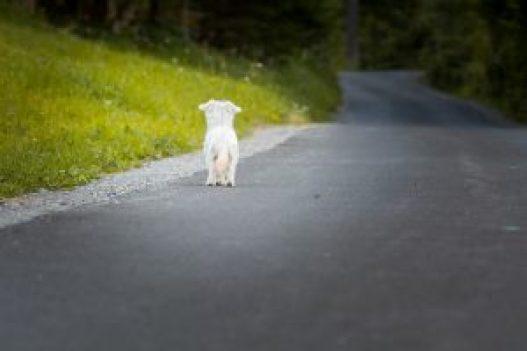 dog-1543329_1920