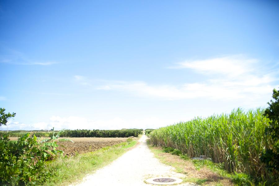 サトウキビ畑とどこまでも広がる青空