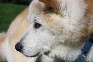 老犬,老猫,健康診断,宮川のほとり動物病院,