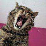 宮川のほとり動物病院,疼痛管理,鎮痛薬,猫,犬,