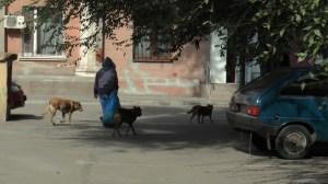 徘徊する野良犬の群れ