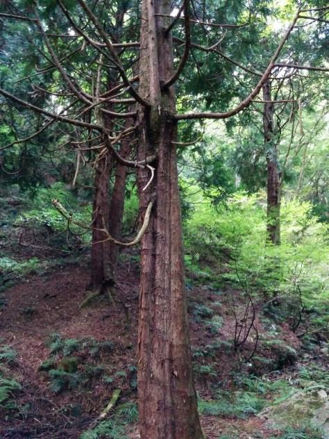 枯れ木 所有林の確認
