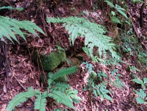 炭焼き小屋の跡1 所有林の確認