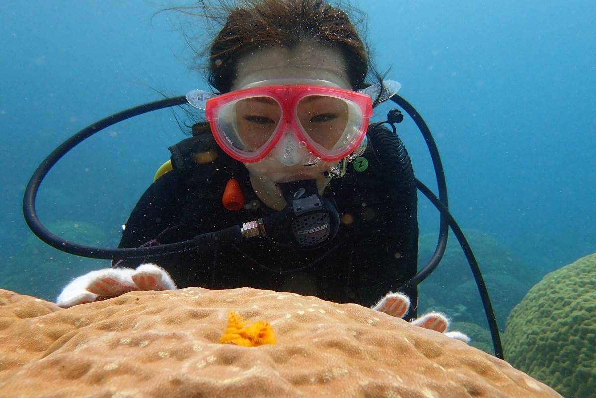中の島ビーチでマンツーマンで体験ダイビング