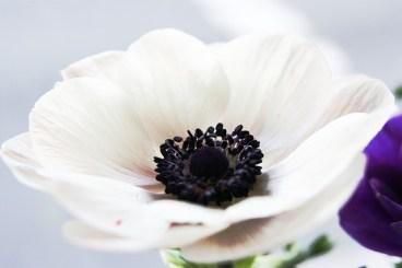 flower-65737_640