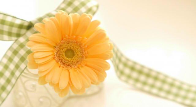 ガーベラの色別の花言葉!ピンク・赤・オレンジ・白・黄色の意味は?青や紫、レインボーに花言葉はある?