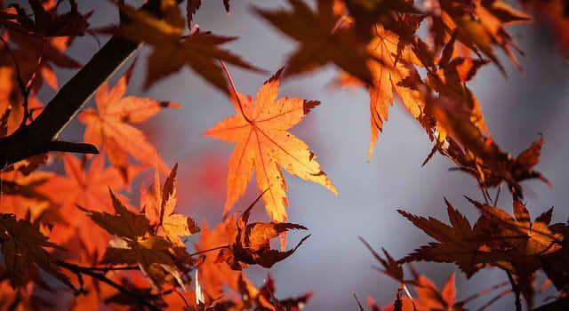 autumn-leave-1415541_640