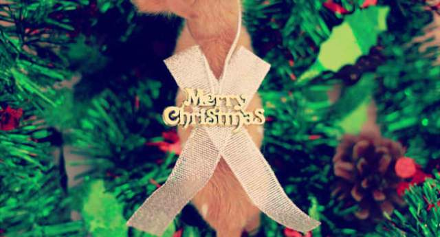 クリスマスツリーを折り紙で!簡単な平面や立体の折り方