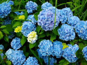 flowers-1045105_640222