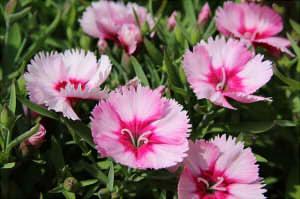 flowers-1358519_640222