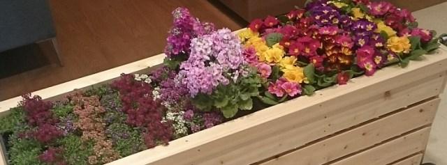 TOTO春の花マルシェCM放映中&開催中