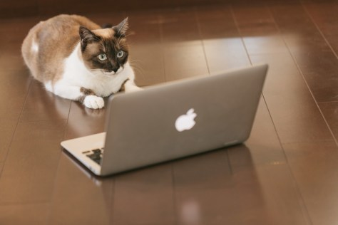 パソコンに熱中するネコ