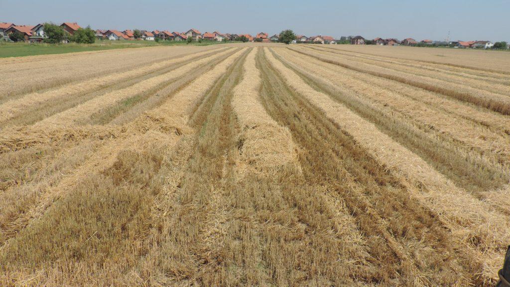 Obavljena žetva pšenice na vakufskoj parceli Kruševlje u Bijeljini