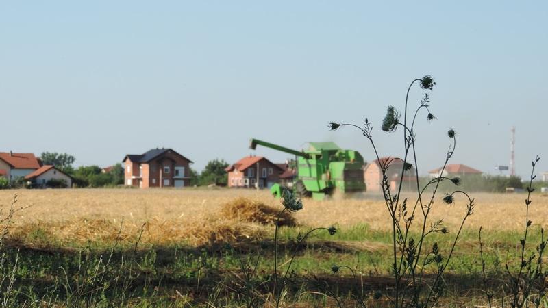 Završena žetva pšenice na Vakufskom poljoprivrednom dobru MIZ BIjeljina