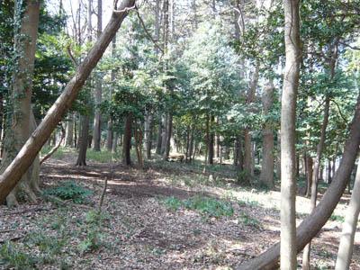 20080315-08.jpg