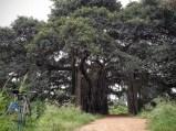 cycling-whitefield-bangalore-08