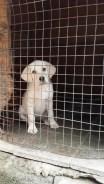 Puppy, Ganesh Estate Homestay, Madikeri