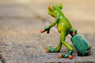 frog-897419_640.jpg