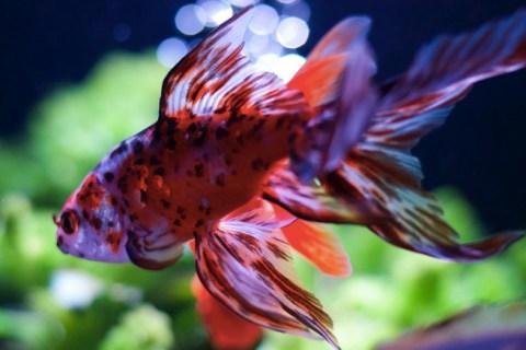 2017年度 第35回日本観賞魚フェア情報
