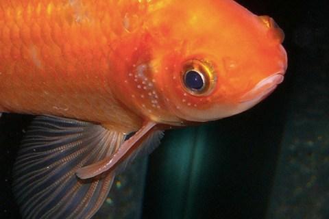 アクアリウムの天敵!気を付けたい魚の病気とトラブル